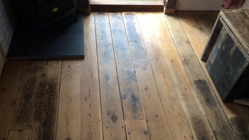 wren-floor